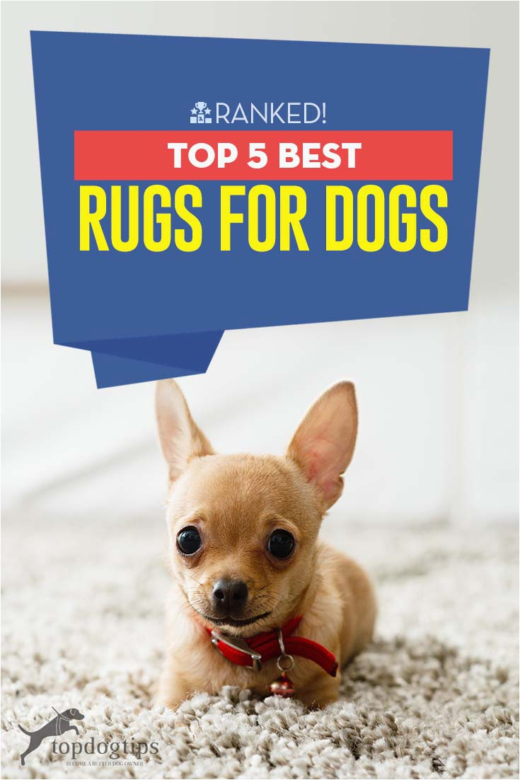 Best area Rug Material for Dogs the Best Rugs for Dogs – top Dog Tips