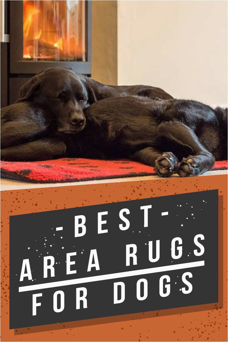 Best Type Of area Rug for Dogs Best area Rugs for Dogs Chew to Pee Resistant & Washable