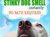 Area Rug Smells Like Dog How to Get Rid Of Stinky Dog Smell Instantly No Bath