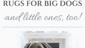 Area Rugs Good for Dogs the Best Rugs for Big Dogs and Little Ones too — House