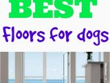 Area Rugs Good for Dogs What S the Best Flooring for Dogs Flooring Inc