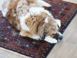 Area Rugs with Dog Designs Dog area Rug Home Decor