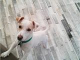 Best area Rug Material for Dogs Let S Talk About Pets and Leather area Rugs
