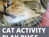 Best area Rugs for Cats with Claws Cat Activity Play Rug Buying Guide Ripple Rug and Puzzle