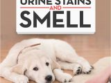 Best area Rugs for Dogs that Pee top 5 Best Pet Odor Eliminator for Removing Dog S Urine