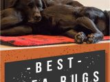 Best Pet Proof area Rugs Best area Rugs for Dogs Chew to Pee Resistant & Washable