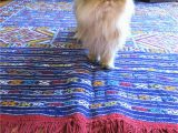 Best Type Of area Rug for Pets How to Choose A Rug for A Cat Friendly Home
