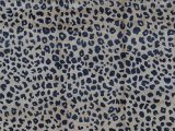 Blue Leopard Print Rug Animal Print Hand Knotted Wool Beige Navy area Rug