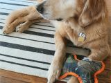 Dog Paw Print area Rugs 7 Benefits Of A Washable Ruggable Rug for Your Home — Artsea